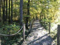 Szlak Dębów Królewskich i Wielkich Książąt Litewskich ścieżki