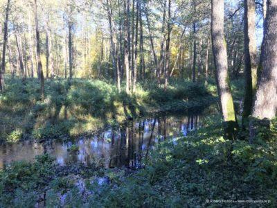 Szlak Dębów Królewskich i Wielkich Książąt Litewskich na Podlasiu